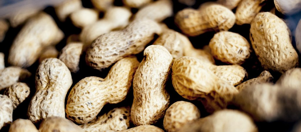 Peanuts with their shells